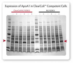 ClearColi-Gel-ApoA1-Expression